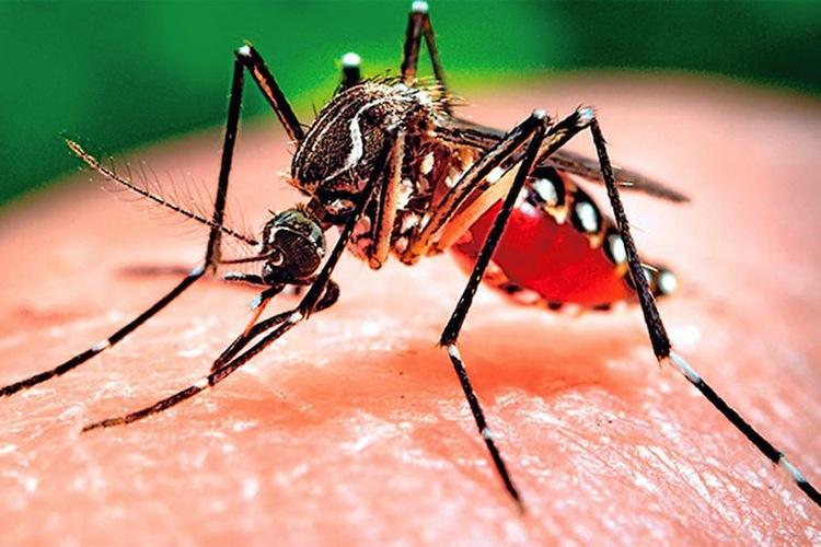 Pican pican los mosquitos